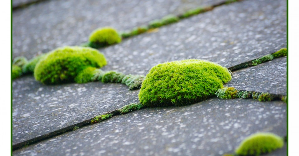 Moss on your roof