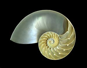 What is a Nautilus?